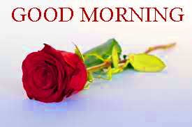 Good Morning Images Photo Pics With Red Rose