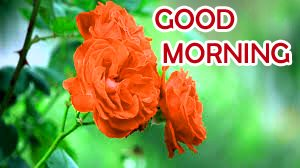 Flowers Good Morning Images Photo For Whatsaap