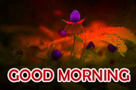 Flowers Good Morning Images Photo Pictures Download