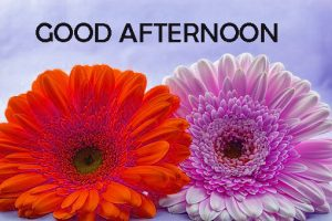 Good Afternoon Images Wallpaper Pics In HD