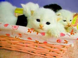 Cute dps Images Wallpaper Pictures Free Download