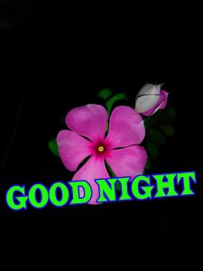 New good night Images Photo Pictures Pics Download