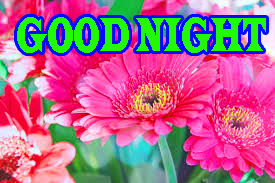 Newgood night Images Wallpaper Pics With Flower