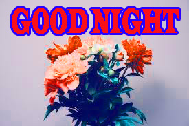 New good night Images Wallpaper Pictures Download