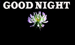 New good night Wallpaper Photo Pics HD Download
