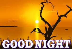 Newgood night Images Wallpaper pictures Download