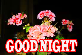 Newgood night Images Photo Pics Download With Flower