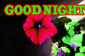 New good night Images Wallpaper Pictures With Flower