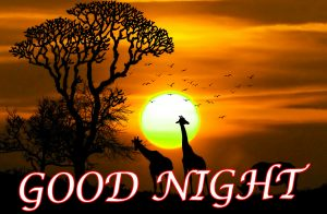 Latest Gud Night  Wallpaper Pictures Images Download