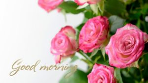 very nice flower good morning images pictures photo hd download