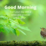 bird good morning images for love pictures wallpaper download