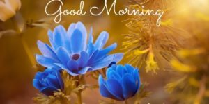 nice happy good morning images pictures photo free hd download