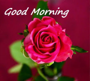happy good morning images wallpaper pictures photo pics free hd download