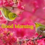 nice bird good morning images pictures photo download