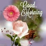 latest good morning images pictures pics photo download