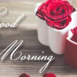 Red rose good morning images pics pictures hd