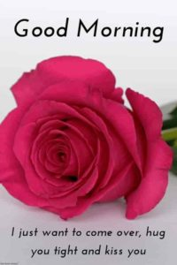 Red rose good morning images wallpaper photo hd download