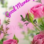 best flower good morning images pictures wallpaper photo download