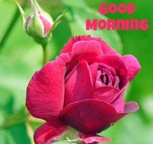 flower good morning images photo wallpaper pictures hd