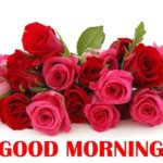 Red rose good morning images pics wallpaper free download