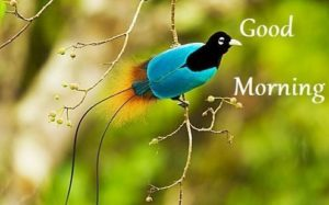 bird good morning images photo wallpaper free download