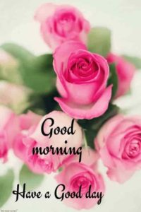 best good morning images pictures photo wallpaper download