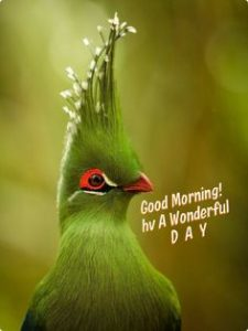 latest bird good morning images pics photo download
