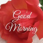 love good morning images pictures pics photo download