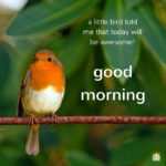 best bird good morning images wallpaper pictures free hd