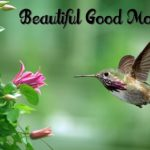 bird good morning images wallpaper photo download