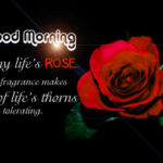 lovely cute good morning images wallpaper pictures photo hd download