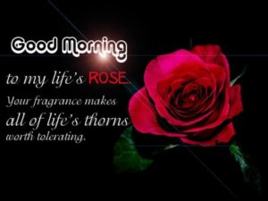 red rose good morning images wallpaper free download