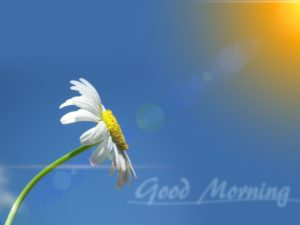 flower good morning images pictures photo wallpaper download