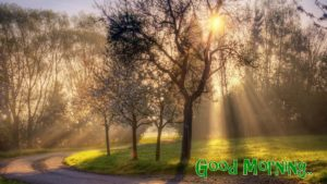 nature good morning images pictures wallpaper photo download