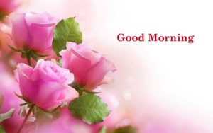 beautiful happy good morning images pictures photo download
