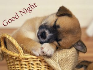 cute puppy good night images wallpaper pictures photo hd