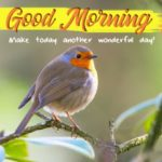 bird good morning images pictures photo download hd