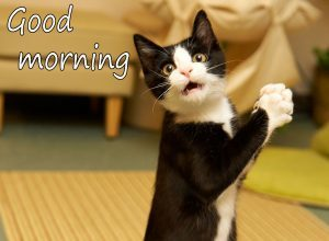 Funny-Good-Morning-Wishes-Images-36-300×220