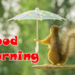 funny good morning images wallpaper pics photo download