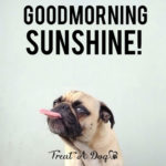 funny good morning images for facebook pictures wallpaper hd