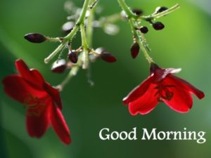 flower good morning images photo pics download