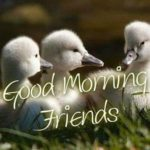 bird good morning images pictures wallpaper for whatsapp