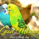 bird good morning images wallpaper photo pics download
