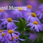 flower good morning images wallpaper pictures free hd