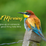 bird good morning images photo wallpaper free hd