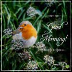 bird good morning images wallpaper photo for whatsapp