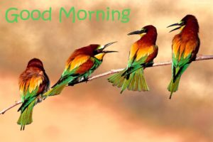 bird good morning images pics wallpaper pictures for facebook