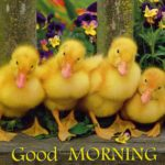 bird good morning images photo wallpaper pics download