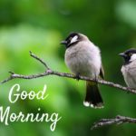 bird good morning images pictures photo download