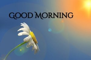 flower good morning images pics pictures hd download